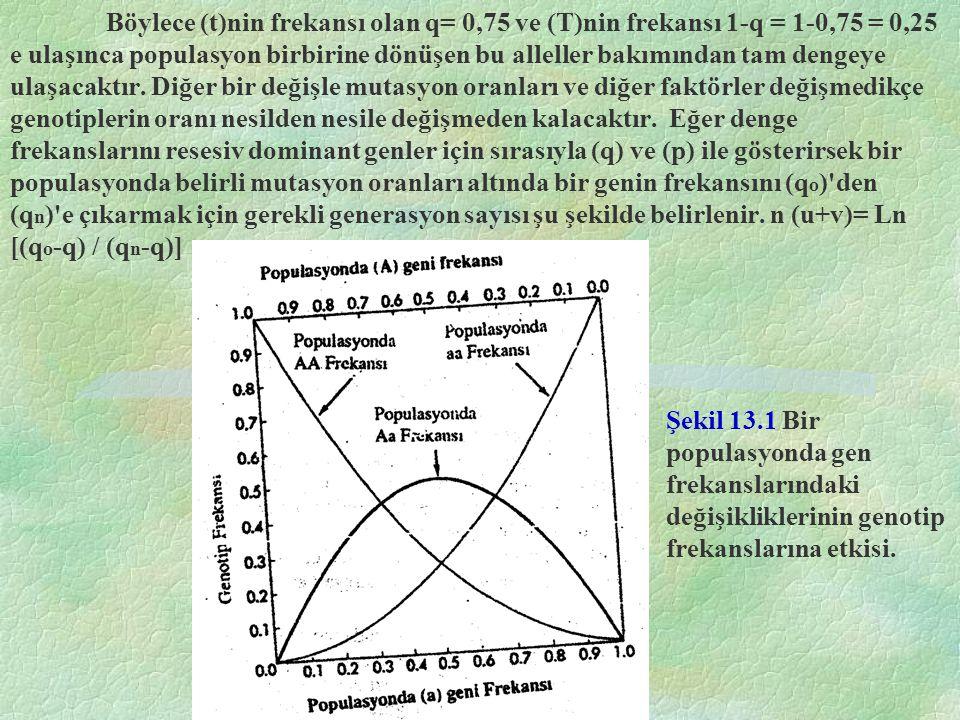 Böylece (t)nin frekansı olan q= 0,75 ve (T)nin frekansı 1-q = 1-0,75 = 0,25 e ulaşınca populasyon birbirine dönüşen bu alleller bakımından tam dengeye ulaşacaktır. Diğer bir değişle mutasyon oranları ve diğer faktörler değişmedikçe genotiplerin oranı nesilden nesile değişmeden kalacaktır. Eğer denge frekanslarını resesiv dominant genler için sırasıyla (q) ve (p) ile gösterirsek bir populasyonda belirli mutasyon oranları altında bir genin frekansını (qo) den (qn) e çıkarmak için gerekli generasyon sayısı şu şekilde belirlenir. n (u+v)= Ln [(qo-q) / (qn-q)]